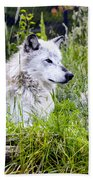 Wolf In The Grass Beach Towel