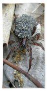 Wolf Spider And Spiderlings Beach Towel