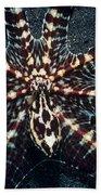 Wonderpus Octopus Beach Towel