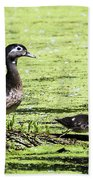Wood Duck And Baby Beach Towel