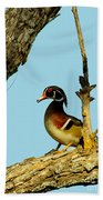 Wood Duck Drake In Tree Beach Towel