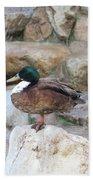 Wood Duck On Fountain Beach Towel