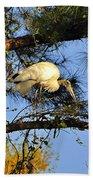 Wood Stork Perch Beach Towel
