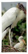 Wood Stork With Nestling Beach Towel