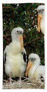 Wood Stork Young In Nest Beach Towel