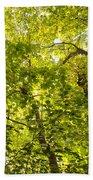 Woodland Background 02 Beach Towel