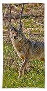 Woodland Coyote Beach Towel