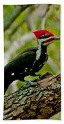 Woodpecker On A Limb Beach Towel