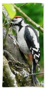 Woodpecker Swallowing A Cherry  Beach Towel