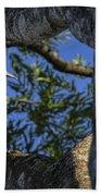 Woody Woodpecker Beach Towel