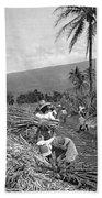 Workers Harvesting Sugar Cane Beach Towel