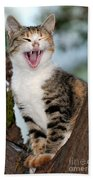 Yawning Cat Beach Towel