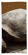 yawning juvenile Galapagos Giant Tortoise Beach Towel