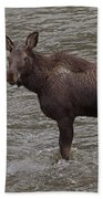 Yearling Moose In The Shoshone River   #1284 Beach Towel