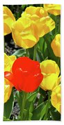 Yellow And One Red Tulip Beach Towel