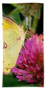 Yellow Butterfly On Pink Clover Beach Towel