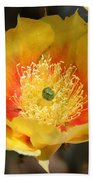 Yellow Cactus Flower Square Beach Towel