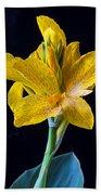 Yellow Canna Flower Beach Towel