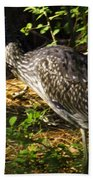Yellow-crowned Night Heron Eating A Fiddler Crab Dinner Beach Towel