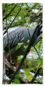 Yellow Crowned Night Heron In Display Beach Towel