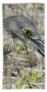 Yellow-crowned Night Heron With Crab Beach Towel