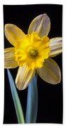 Yellow Daffodil Beach Towel