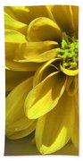 Yellow Dahlia Closeup Beach Towel