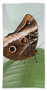 Yellow-edged Giant Owl Butterfly #3 Beach Towel