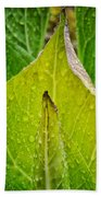 Yellow Green Skunk Cabbage Square Beach Towel