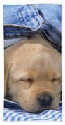 Yellow Labrador Puppy Asleep In Jeans Beach Towel