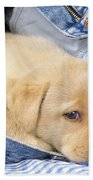 Yellow Labrador Puppy In Jeans Beach Towel
