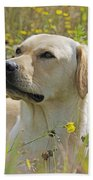 Yellow Labrador Retriever Beach Towel