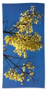 Yellow Leaves In Fall And Deep Blue Sky Beach Towel