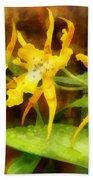 Yellow Miltassia Orchids Beach Towel