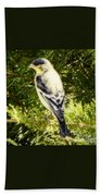 Yellow N Black Finch Beach Towel