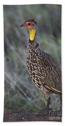 Yellow-necked Francolin... Beach Towel