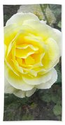 Yellow Rose Of Summer Beach Sheet