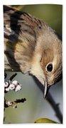 Yellow-rumped Warbler - Precious Beach Towel