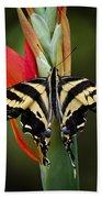 Yellow Swallowtail Butterfly  Beach Towel