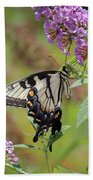 Yellow Swallowtail Butterfly Taking A Drink Beach Towel