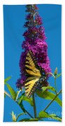 Yellow Tiger Swallowtail Papilio Glaucus Butterfly  Beach Towel