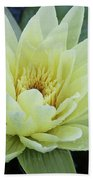 Yellow Water Lily Nymphaea Beach Towel