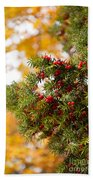 Taxus Baccata Or Yew Red Fruits On Twig  Beach Towel
