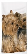 Yorkshire Terrier Dogs Beach Towel