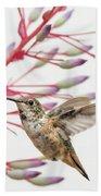 Young Allen's Hummingbird Beach Towel