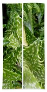 Young Aloe In Stereo Beach Towel