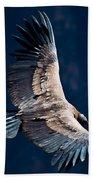 Young Andean Condor Beach Towel