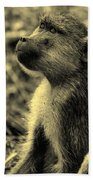 Young Baboon In Black And White Beach Towel