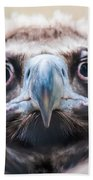 Young Baby Vulture Raptor Bird Beach Towel