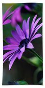Young Daisies Beach Towel